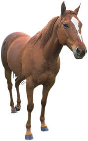 equine law attorney, animal lawyer