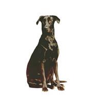 Animal Law/Medical Law
