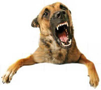 dog bite lawsuits animal law